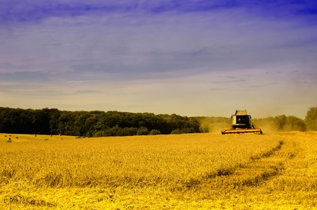 the harvester on the wheat field photo