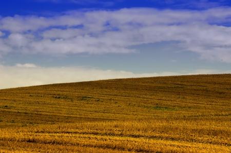cut off the wheat fields photo