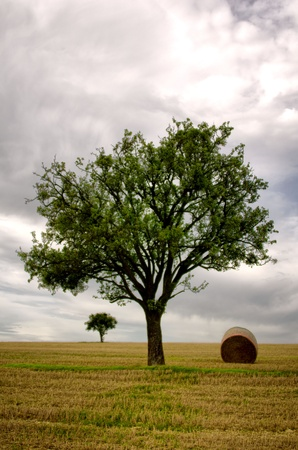 the tree  and straw bales photo