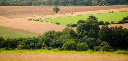 the countryside with fields meadows and trees photo