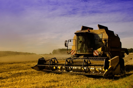 combine harvester reaps the corn photo