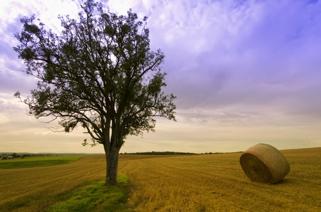 the tree  and straw bales Stock Photo - 11241857
