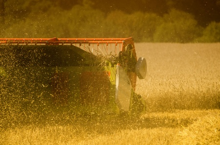 the combine harvester in the field photo