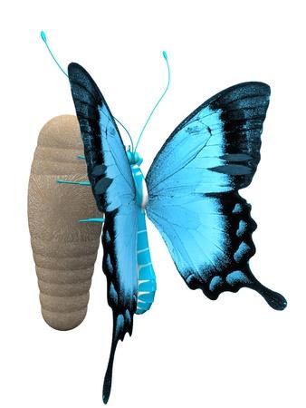 metamorfosis: la hermosa mariposa con alas