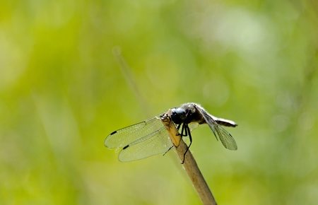 the dragonfly photo