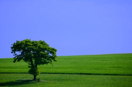 green tree in the fields photo