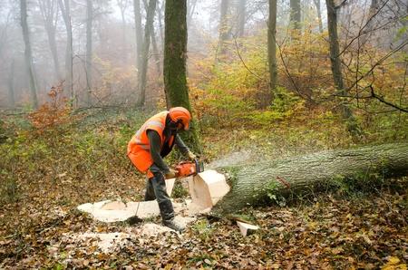 木こりと森