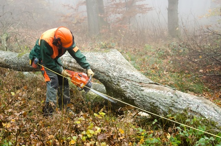 lumberman: the  lumberjack and the forest