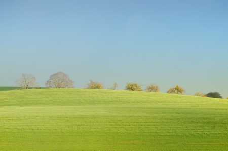 green tree and field photo