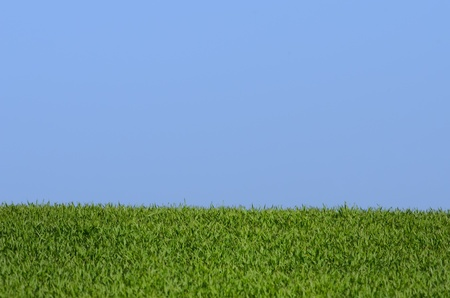 blue sky and green grass Stock Photo - 13620049