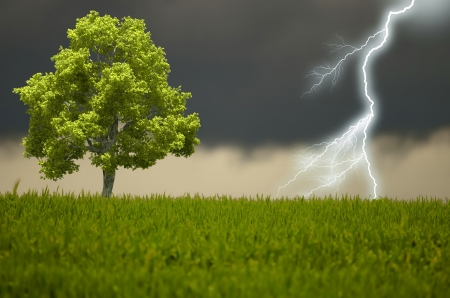the tree and the storm photo