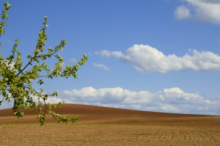 plowed: the plowed fields