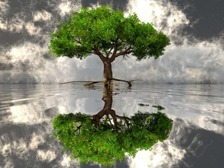 緑の木と水