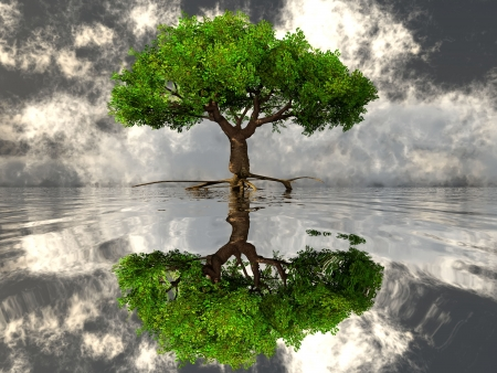 the green tree and the water photo