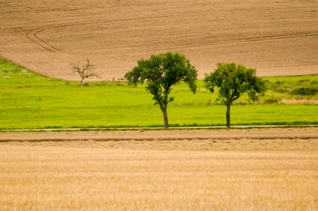 two green trees in a field photo