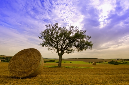 a straw bale and a green tree photo