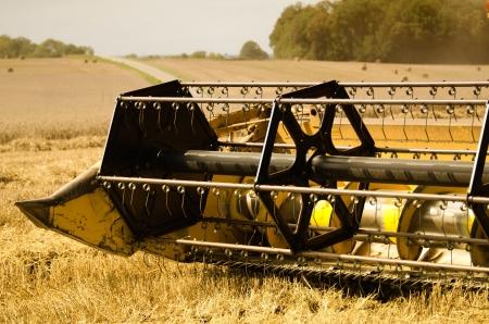 combine harvester: cosechadora cosecha el ma�z Foto de archivo