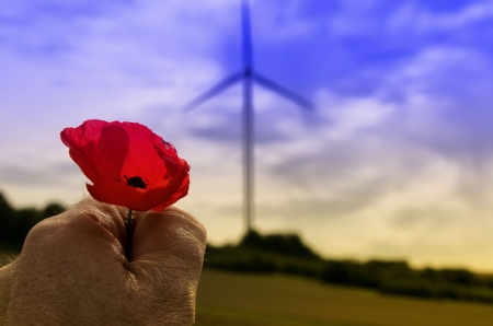 the poppy and the wind turbine photo