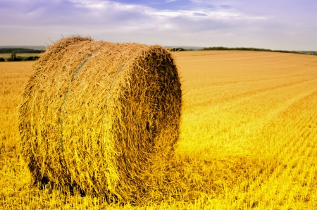 straw bale in the field photo