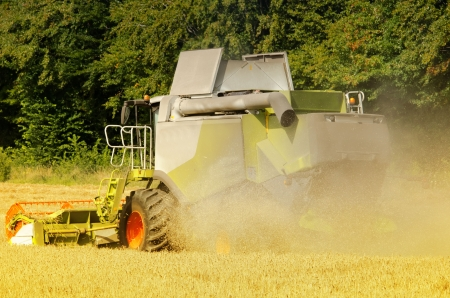 the combine harvester reaps the corn photo