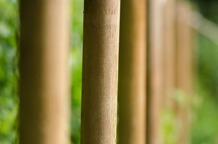 alignement: alignment of many wooden stakes