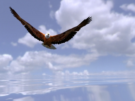 the eagle over the sea photo
