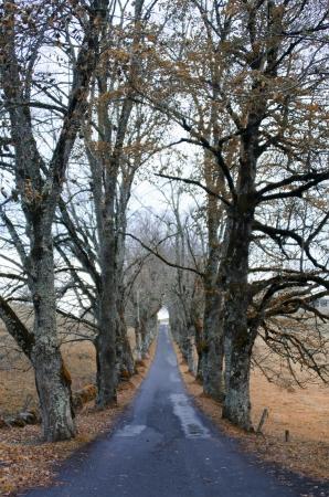 treelined: the tree-lined road