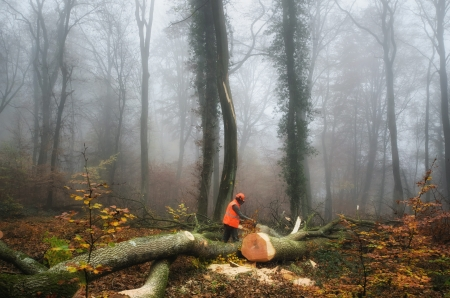 the  lumberjack and the forest photo