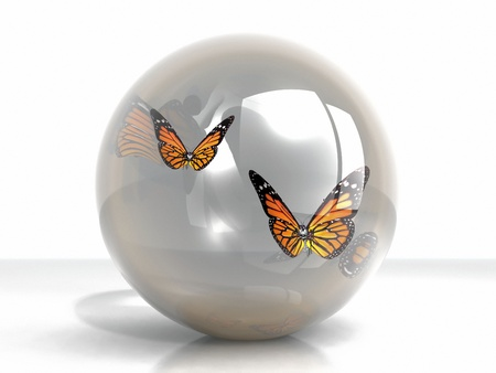 the beautiful butterfly in a bubble photo