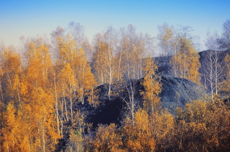 pit fall: Birch on a mine dump Stock Photo