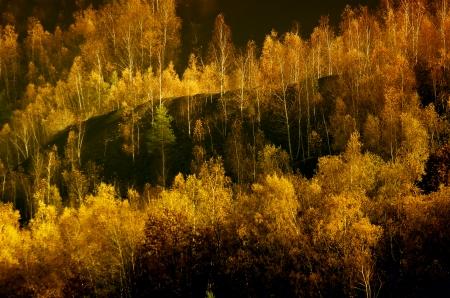 pit fall: Birch on a mine dump Stock Photo