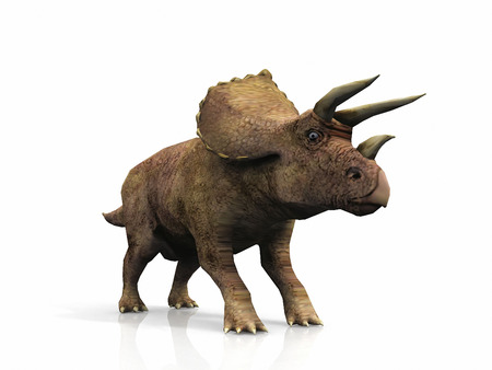 triceratops: Triceratops  on a white background Stock Photo