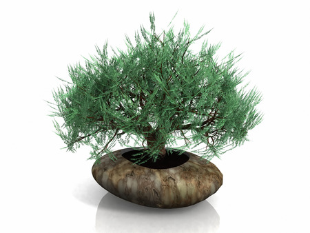 minature: bonsai tree
