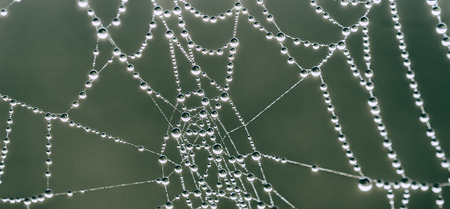 dewdrops: spiderweb and dewdrops Stock Photo