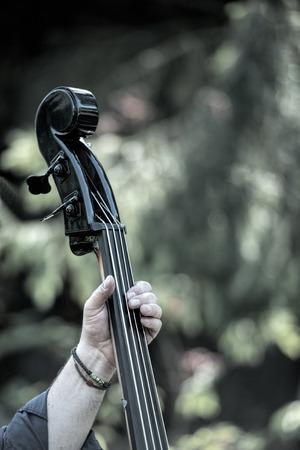 bass player: the bass player