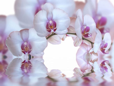 water reflection: orchids and reflection in the water
