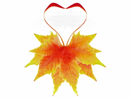 the autumnal leaves heart shaped