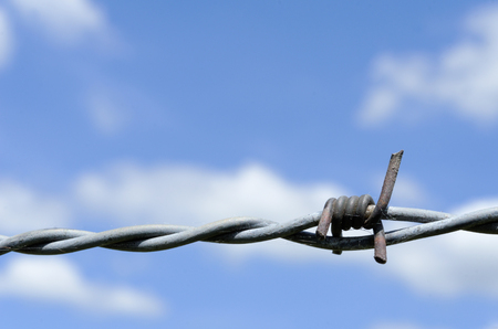 the barbed wire