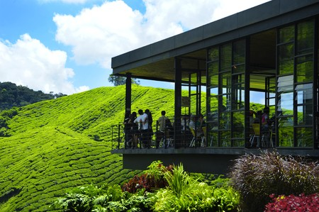 茶畑のグリーン ビュー 写真素材