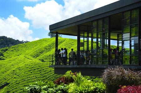 Green view of Tea Plantations