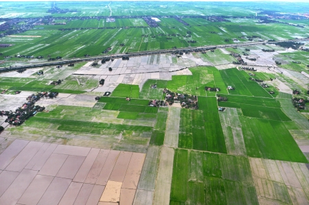 arial view: Arial view of paddy field in Kedah, Malaysia