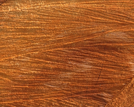 wooden texture: timber surface natural wood background