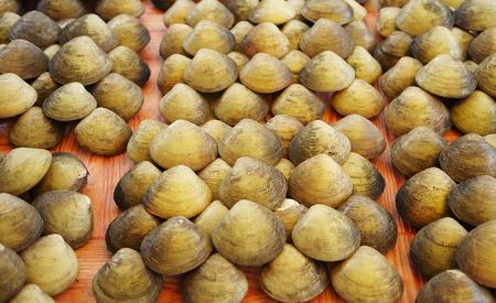 Seashell species moluska (Polymesoda expansa) Stock Photo