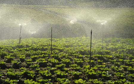 Agriculture valley near Kinabalu Mountain, Malaysia Stock Photo