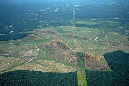 パーム油のプランテーションの航空写真