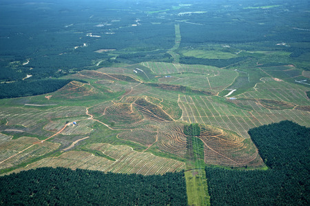 Aerial view of palm oil plantations Stock Photo
