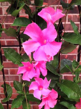 Ivy flower  Banco de Imagens