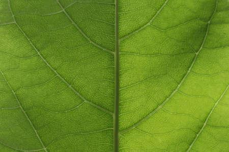 green background: vertical green leaf background