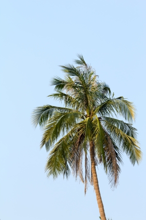 Coconut with blue sky