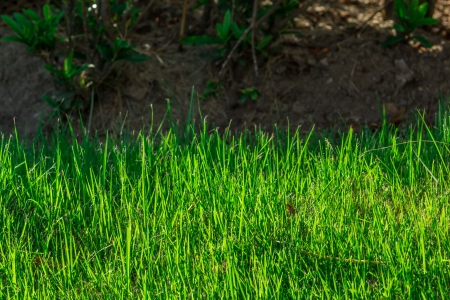 Grass background closeup photo